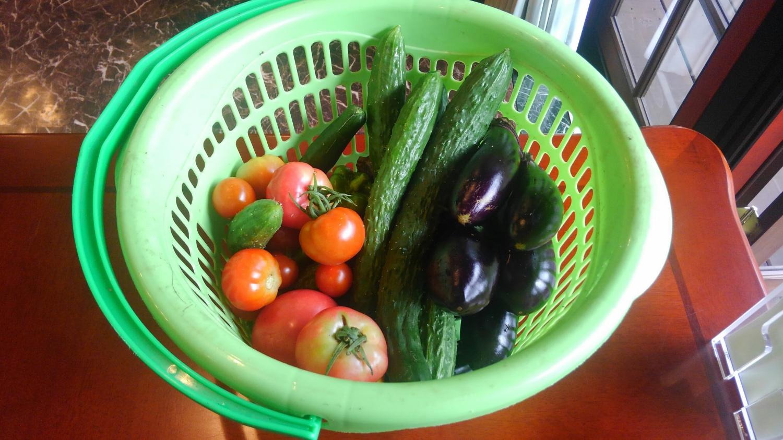 夏に訪れたときにお土産に頂いた、取れたての野菜